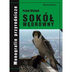 Sokół wędrowny - monografia - Paweł Wieland